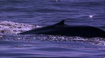 Blue Whale Stock Footage