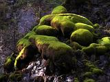 Green Mossy Boulders