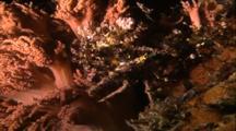 Decorator Crab On Soft Coral