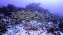Signs Of Destructive Fishing On Coral Reef