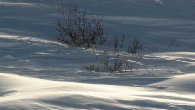 Severe wind blowing snow over Tundra