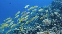 Fishes On The Coral Reef