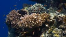 Assortment Of Fish Swimming Around Coral
