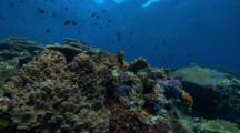 Pan Across Shallow Coral Reef