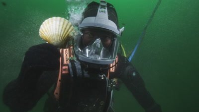 Work divers at scallop farm