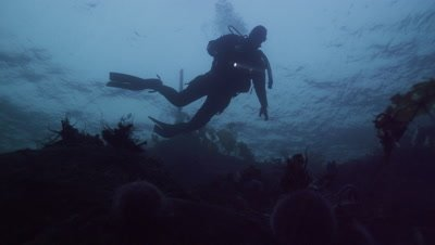 Diver silhouetted against dark blue surface