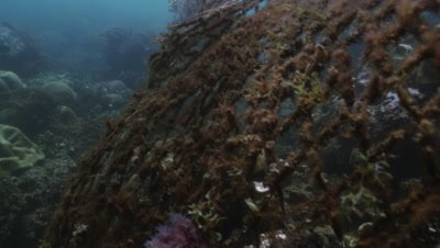 Ghost nets on coral reef