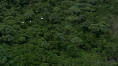 Tracking birds flying over rainforest