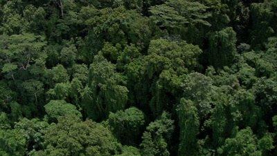 Island coast trees and birds below