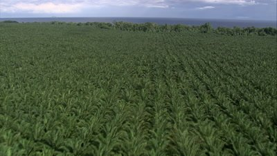 tilt down to palm oil plantation then tilt up to horizon