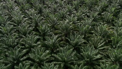 High angle view of travelling over palm oil plantation