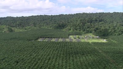 above palm oil plantation