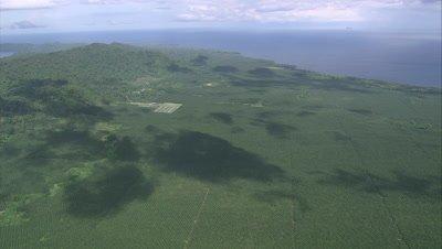 Flying over large palm oil plantation near coast