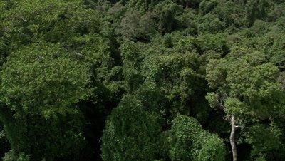 High angle of trees, tracking birds fly along coast