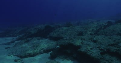 travel over rocky seabed, school of fish swimming in distance