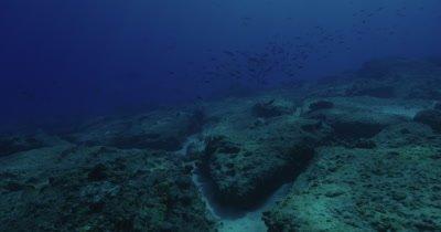 School of fish swimming near sea bed