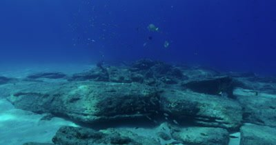 Cam travels along reef and a variety of reef fish
