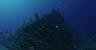 Divers coming over wreck surrounded by a school of grunts.