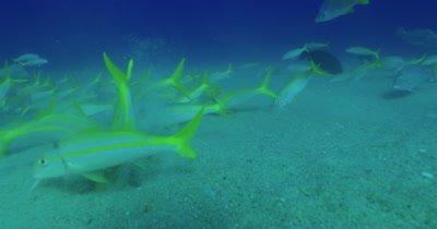 Traveling along sandy ocean floor as fish swim along it