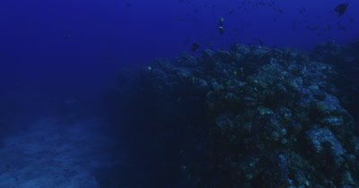 Traveling along rocky reef with a variety of reef fish