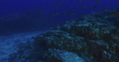 Traveling along reef as a large school of reef fish cross the frame