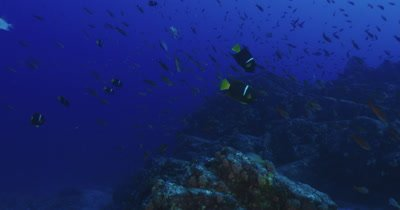 Traveling along reef with a variety of reef fish