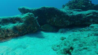 Eel under rock