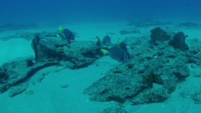 Tracking fish while feeding along rocky reef