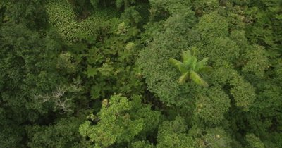 Close up flying over rainforest