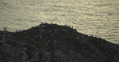 Birds perched on rock formation.