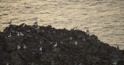 Birds perched on rock formation