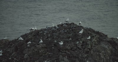Zoom out on birds sitting on rock formation.