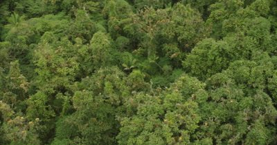 Bird's eye view scanning top of rainforest on island