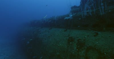 Traveling close along wreck, fish swimming out of crevices. Coral growth along sides.