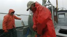 Bristol Bay Salmon Fishery -Fishermen Pick Fish From Net