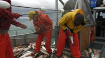 Bristol Bay Salmon Fishery - Fishermen Pick Fish From Net