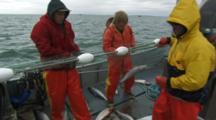 Bristol Bay Salmon Fishery - Fishermen Pick Fish From Net, Pan From Net