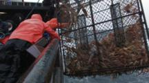Crab Fishing Bering Sea - Fishermen Raise Crab Pot, Opies