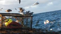 Crab Fishing Bering Sea - Sea Gulls Ride On Crab Pots In Rolling Sea