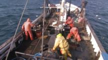 Man On Fishing Boat Uses Gaff To Remove Halibut From Line, Longlining For Halibut And Black Cod Alaska