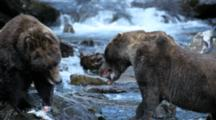 Brown Bears Grizzly Bears Of Katmai - Bear Standoff And Fight On River