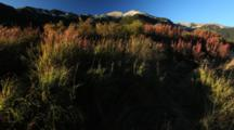 Brown Bear Habitat And Scenics Of Katmai Alaska - Beautiful Grass And Fireweed Early Fall Colors