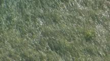 Tall Grass Of Alaskan Island Blows In The Wind, Interesting Wind Patterns