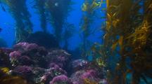 Travel Through Kelp Forest