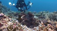 Diver, Giant Clam, Tridacna Gigas