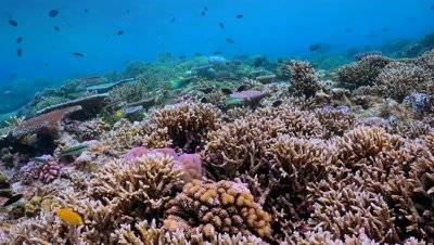 coral reef, locked down, colorful fish, lush corals, South Pacific