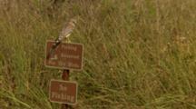 Small Bird Of Prey On Sign, Possibly American Kestrel