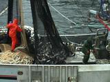 Purse Seiner Salmon Fishing Boat