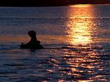 Hippopotamus, Yawning At Sunset