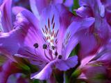 Flower, Blooming, Opening